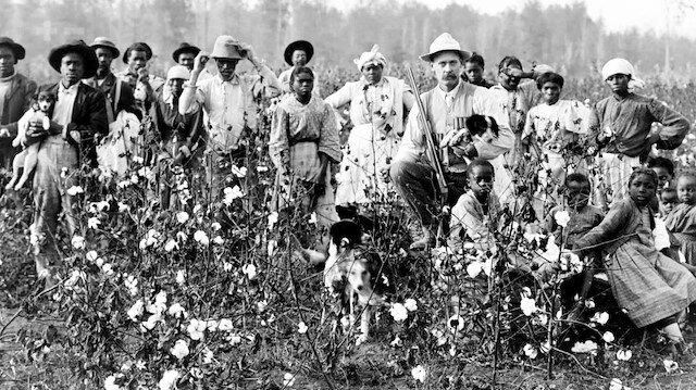 Kölecilik tarihine tutulan ışık