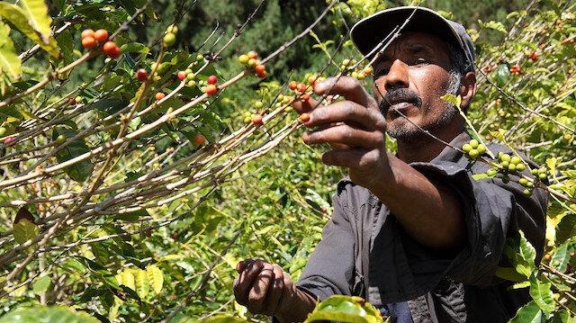 2050'de kahve olmayabilir