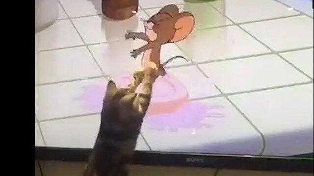 Televizyonda gördüğü Jerry'i yakalamaya çalışan kedi güldürdü