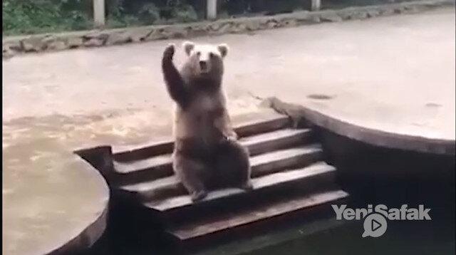 Hayvanat bahçesindeki ayı ziyaretçilerden yemek istedi