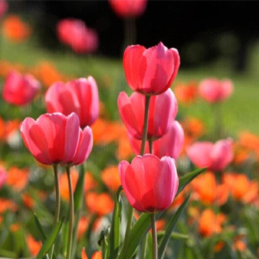 مئات الملايين.. تركيا تكشف عن قيمة صادرتها من الزهور والورود