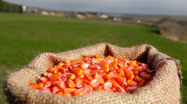 Yerli tohumla üretim arttı: Gıda fiyatları düşecek