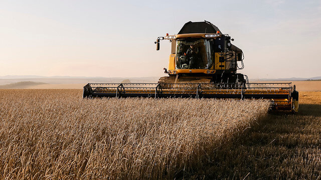 A combine harvests wheat in a field of the Solgonskoye private farm