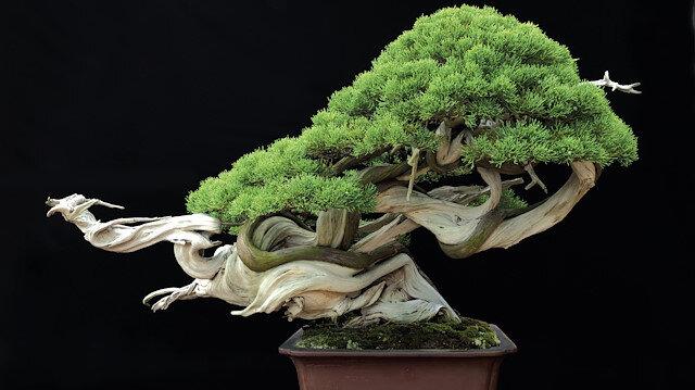 Ağaçların değerinin 13 milyon yen (yaklaşık 118 bin dolar).