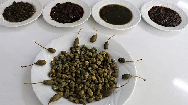 Burdur'dan 29 ülkeye kapari ürünü ihracı