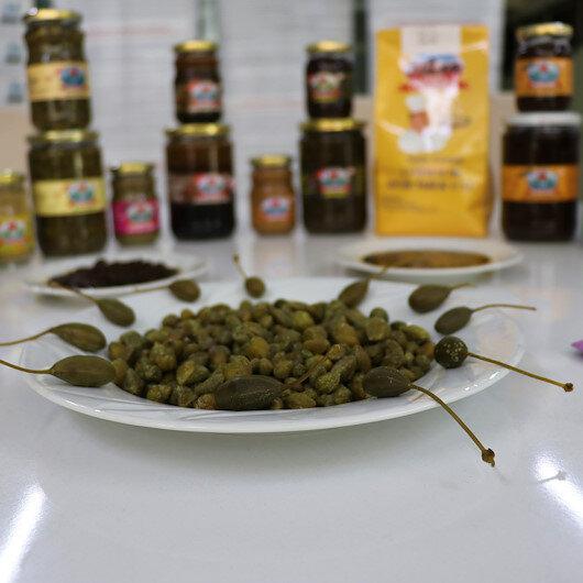"""شركة تركية تصدّر 17 منتجًا من نبتة """"القبار"""" لـ29 دولة"""