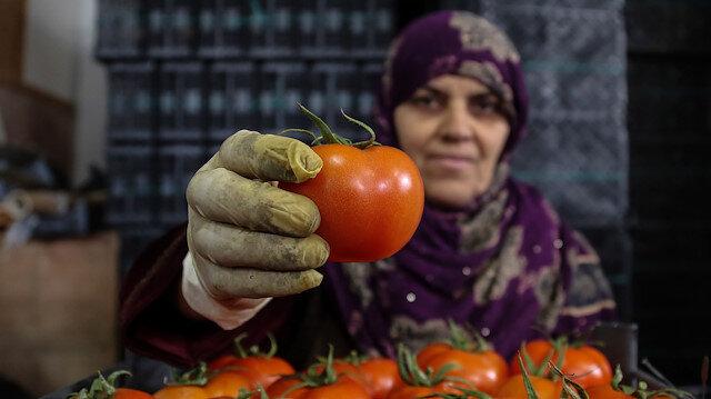 Antalya'da domates paketleyen kadın işçiler
