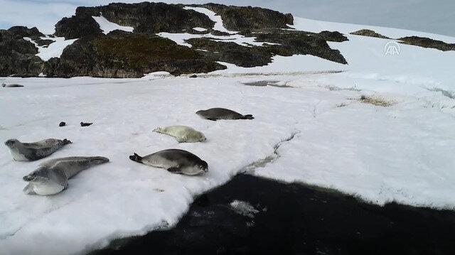 World's biggest natural laboratory in Antarctica