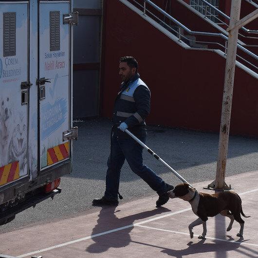 Okula giren pitbull 2 öğrenciyi yaraladı