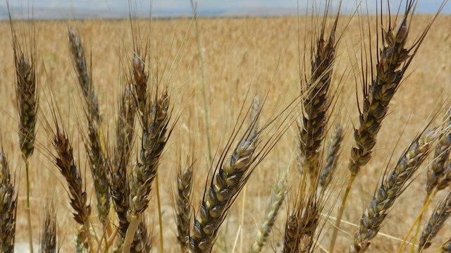 Bakan Pakdemirli: Tohum üretimimiz 1 milyon 50 bin ton oldu