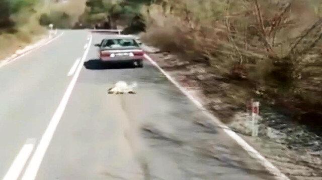 Vicdansız adamın köpeğe yaptığı işkence sosyal medyayı ayağa kaldırdı
