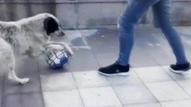 Futbolcu köpek sosyal medyada büyük ilgi gördü