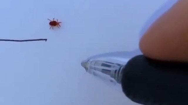 Örümceğin çizgi oyunu
