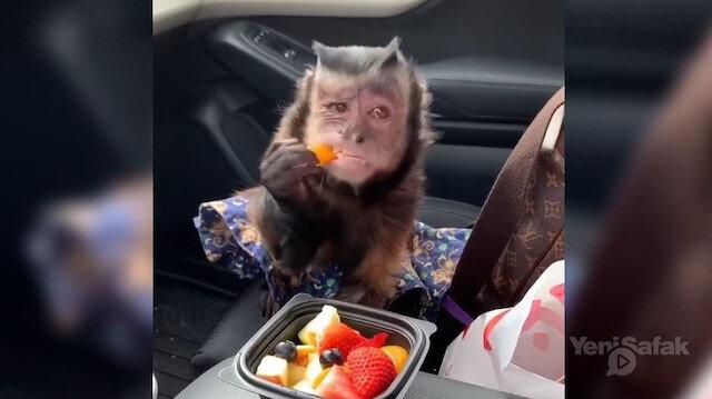 Meyve sevdalısı maymunun görüntüleri sosyal medyayı salladı