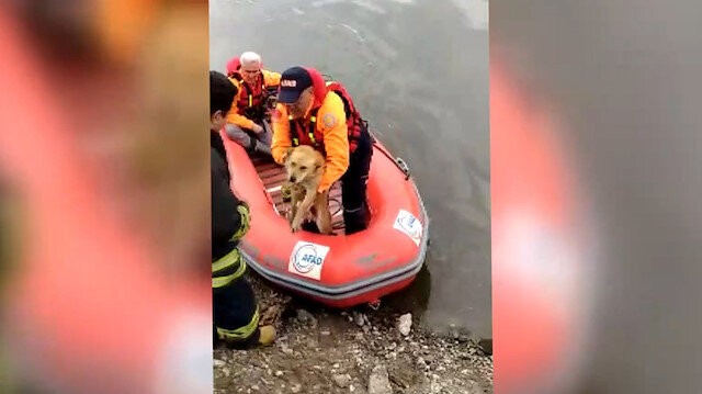 AFAD sokak köpeğini Meriçte boğulmaktan kurtardı
