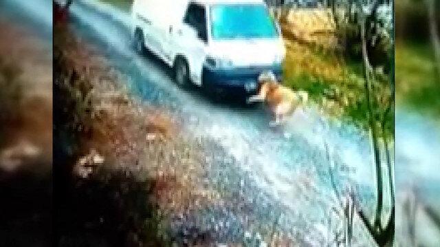 Köpeğe çarpan minibüs şoförü arkasına bile bakmadı