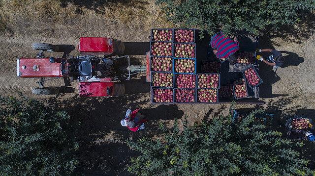 Türkiye, dünya elma üretiminin yüzde 4'ünü gerçekleştiriyor.