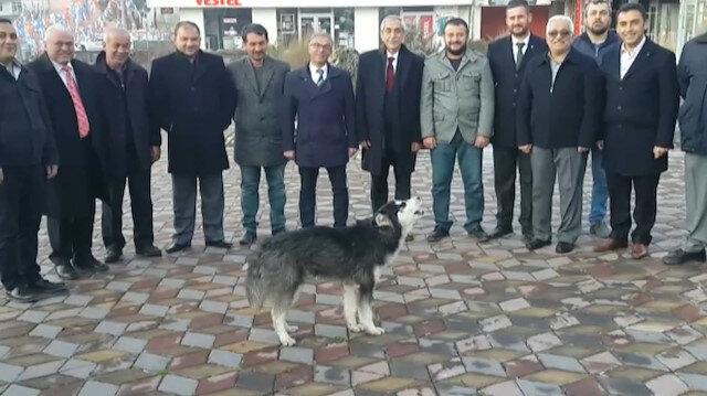 MHP seçim irtibat bürosu önünde uluyan kurt şaşırttı