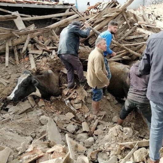 Depremde ahır çöktü inekler enkaz altında kaldı