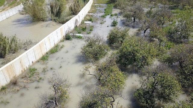 Lemas Deresi'nin taşması sonucu limon bahçeleri ve muz seralarını su bastı.