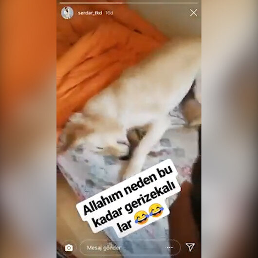 Köpeğe deodorantla işkence yapıp videosunu paylaştı
