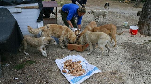 Sahipsiz 600 köpeğin bakımını yapıyorlar