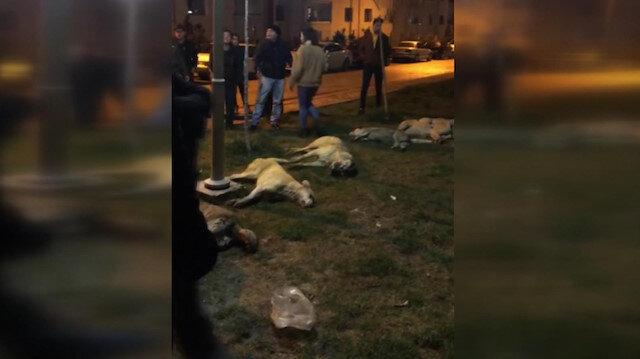 Ankarada 13 köpek zehirlenerek öldürüldü