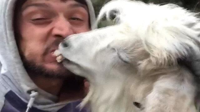 Rizeli gencin keçi ile ekmek kavgası kırdı geçirdi