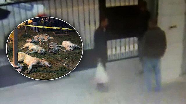 Ankarada köpekleri katleden şüpheliler güvenlik kamerasında