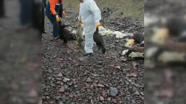 Ankarada onlarca sokak köpeği ölüsü bulundu