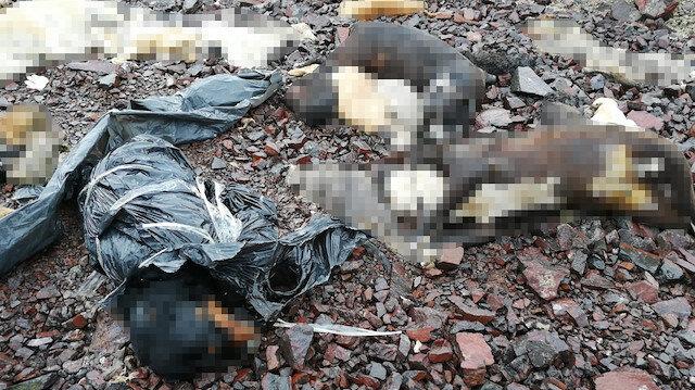 Yine Ankara yine hayvan katliamı