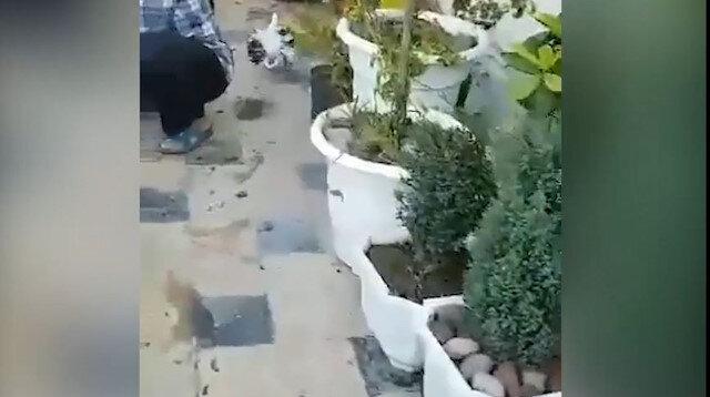 Eşine çiçek götüren kuş