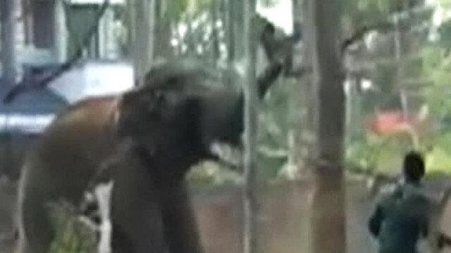 Bakıcısını hortumuyla kaldırıp yere vuran fil