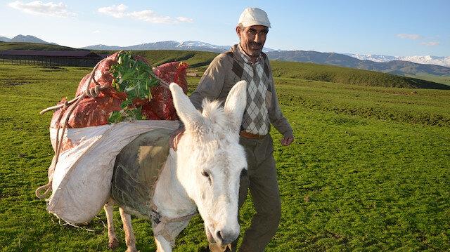 5 kilometre gidip topluyorlar: Günde 600 lira kazanan var