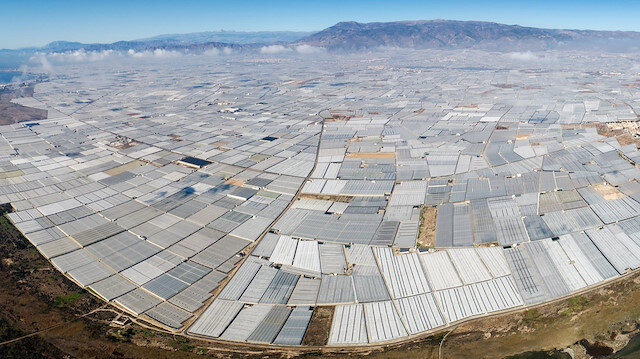 Türkiye genelinde 700 bin dekarda örtü altı tarım yapılıyor.