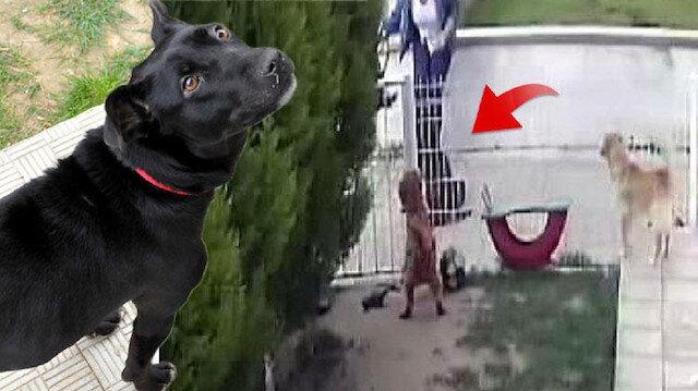 Kara isimli köpeğe E.K'nın vurduğu an.