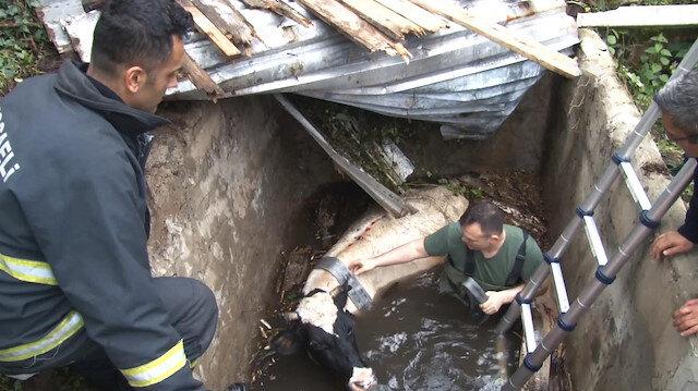 Su kuyusuna düşen ineği itfaiye ekipleri kurtardı