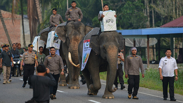 Endonezya'da seçim sandıkları fil sırtında taşınıyor