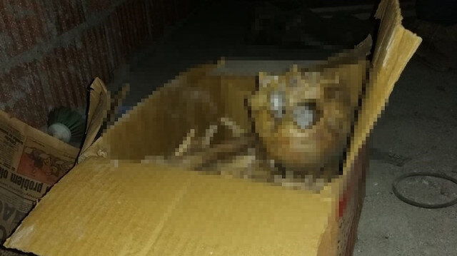 Adana'da ardiyede kutunun içinde bulunan iskelet