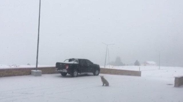 Uludağ'da kar yağışı sürerse pistler açılacak
