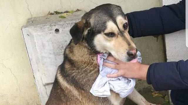 Sokak hayvanlarını kesip yiyordu: Kıskıvrak yakalandı