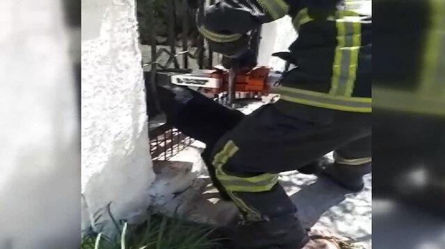 Bahçe kapısına sıkışan Zeytin'i itfaiye kurtardı