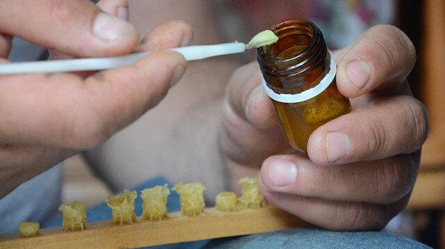 Gramla sağılan arı sütü, üreticilerin yüzünü güldürüyor