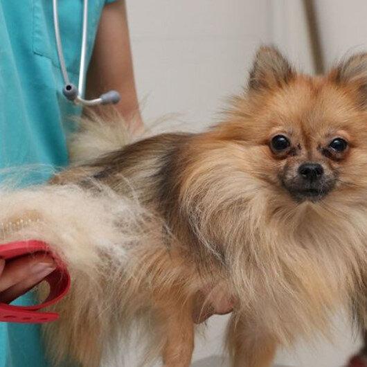 Tüyleri kesilirken verilen anestezi köpeği öldürdü