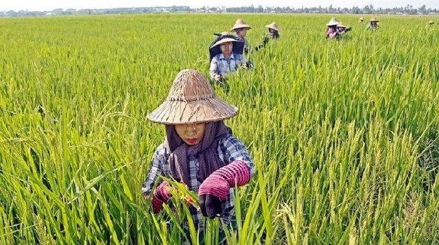 Cambodian rice exports to China surge following EU tariffs