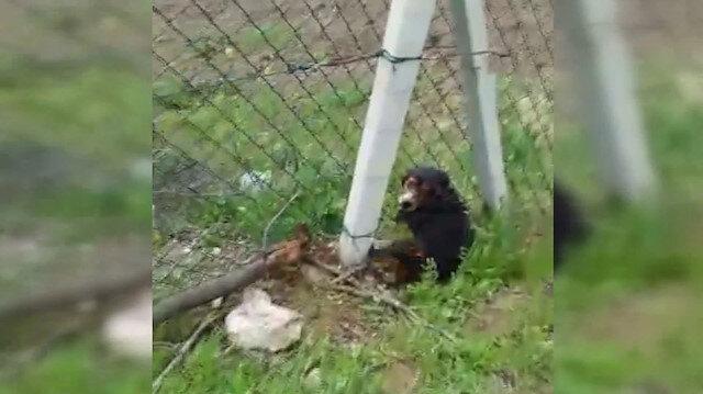 Tel örgülere sıkışan köpeği duyarlı vatandaş kurtardı