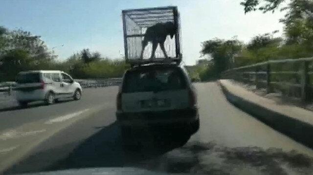 Köpeğin otomobil üzerinde yolculuğu görenleri şoke etti