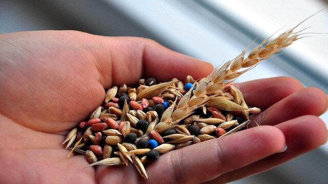 Bilecik'ten 40 ülkeye hibrit tohum