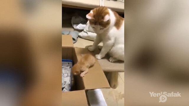 Yavrusuna tekme atan anne kedi