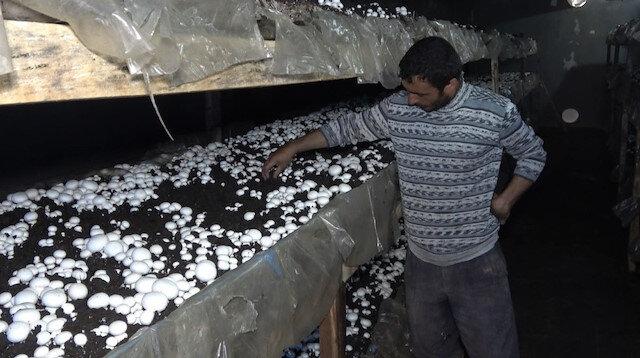 Yılda 220 ton üretip, kilosunu 8 liradan satıyor